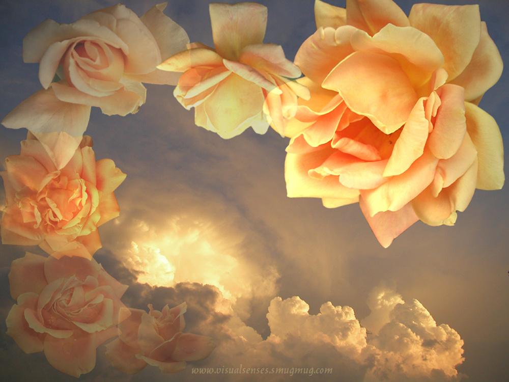 Golden rosy sky.