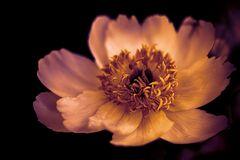 goldene Blüte