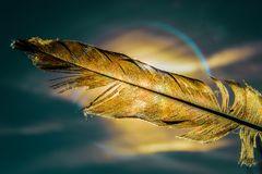 Goldene Feder
