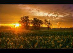 Goldene Felder I