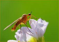 Goldene Fliege ...
