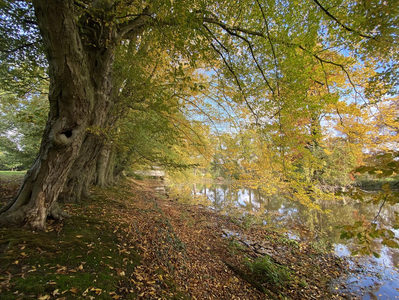 Goldene Herbstzeit