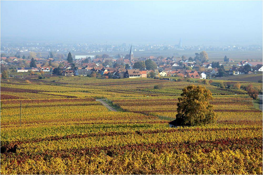 Goldene Pfalz (2)