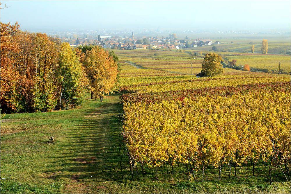 Goldene Pfalz