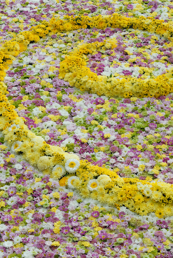 Goldene Rose 2010 in Bad Nauheim, No. 3