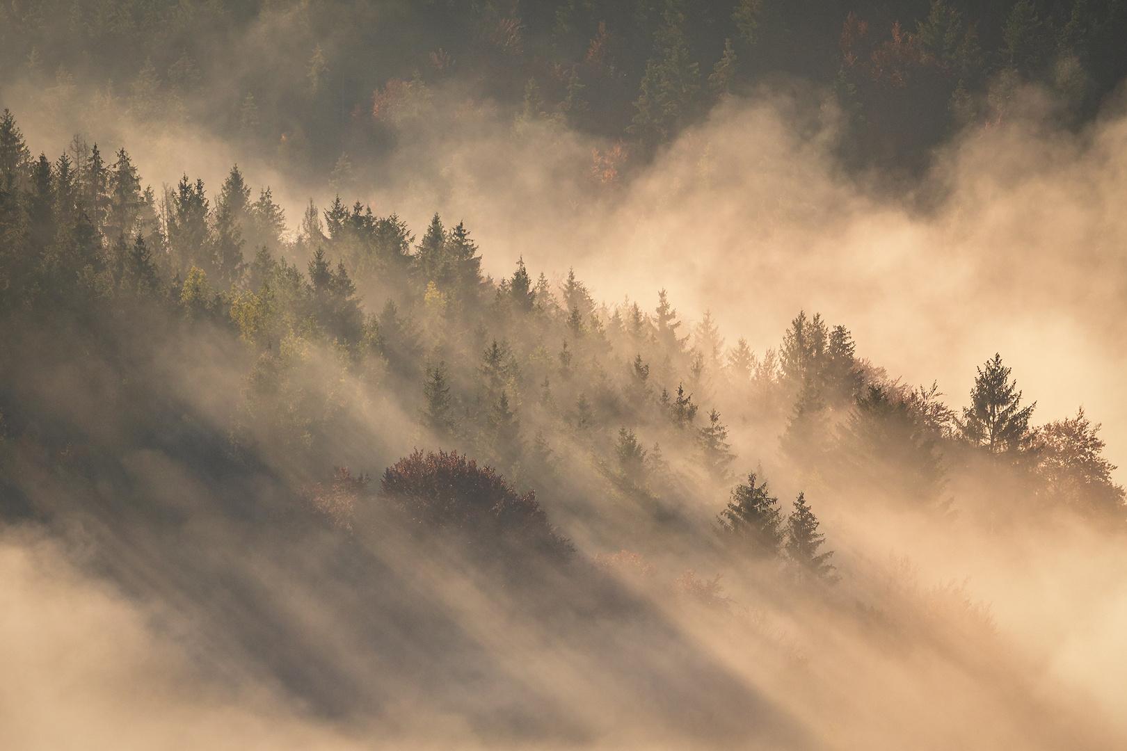Goldene Sonnenstrahlen durchschneiden den Nebel