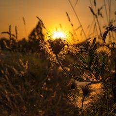 Goldene Stunde in Bietigheim
