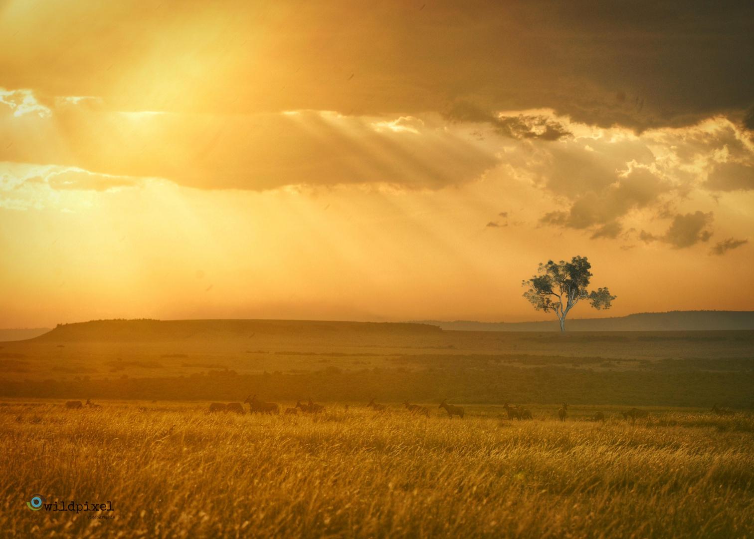 Goldene Stunde in Kenia