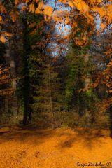 Goldenen Herbst in Englischgarten -002