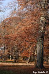 Goldenen Herbst in Englischgarten.