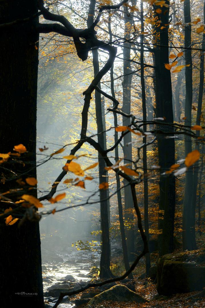 Goldenen Herbst_Serie