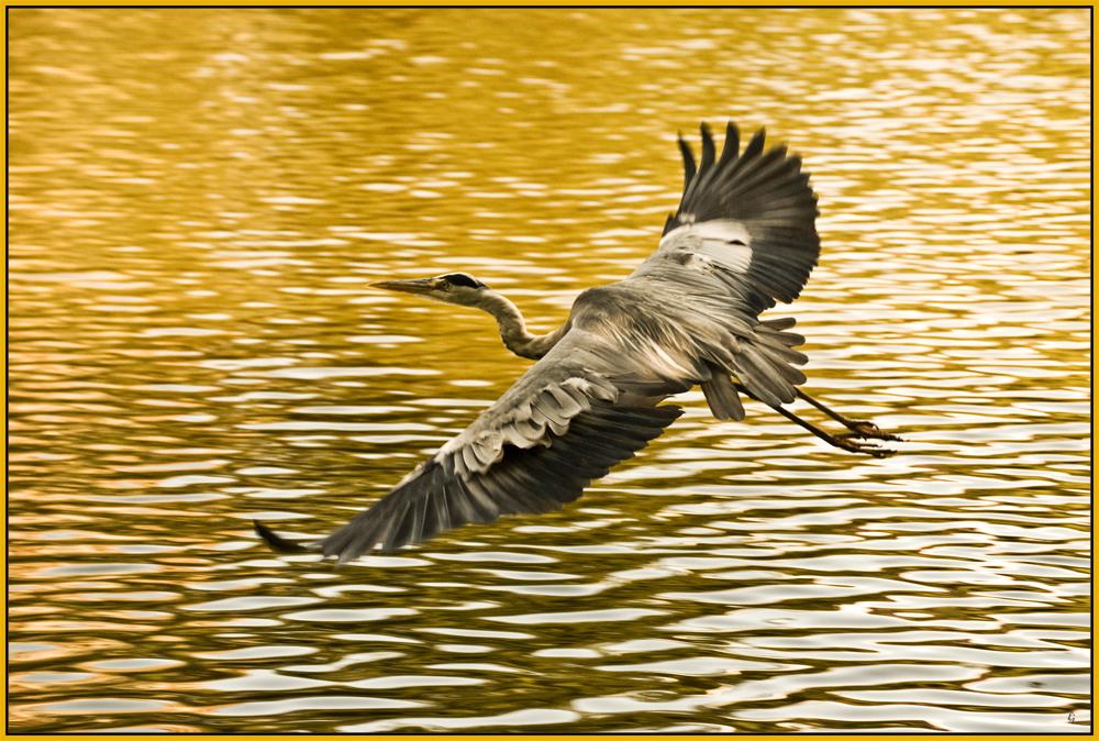 Goldener Flug