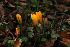 goldener Fühling II