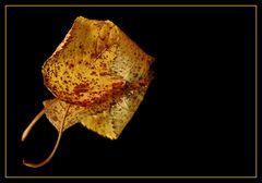 Goldener Herbst (2) - Reload