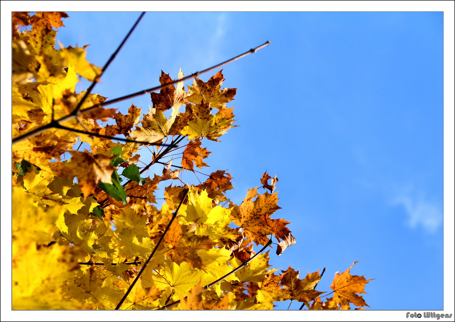 Goldener Herbst 2012 _01
