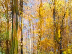 *** Goldener Herbst ***