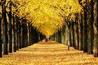 * Goldener Herbst *