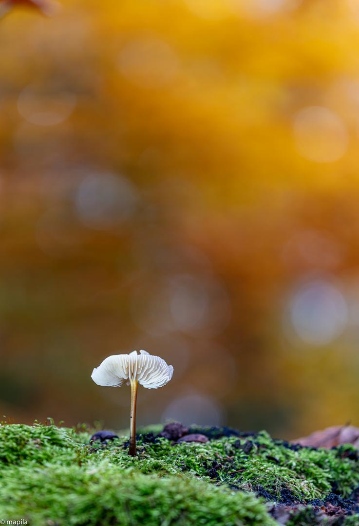——— goldener Herbst  ———