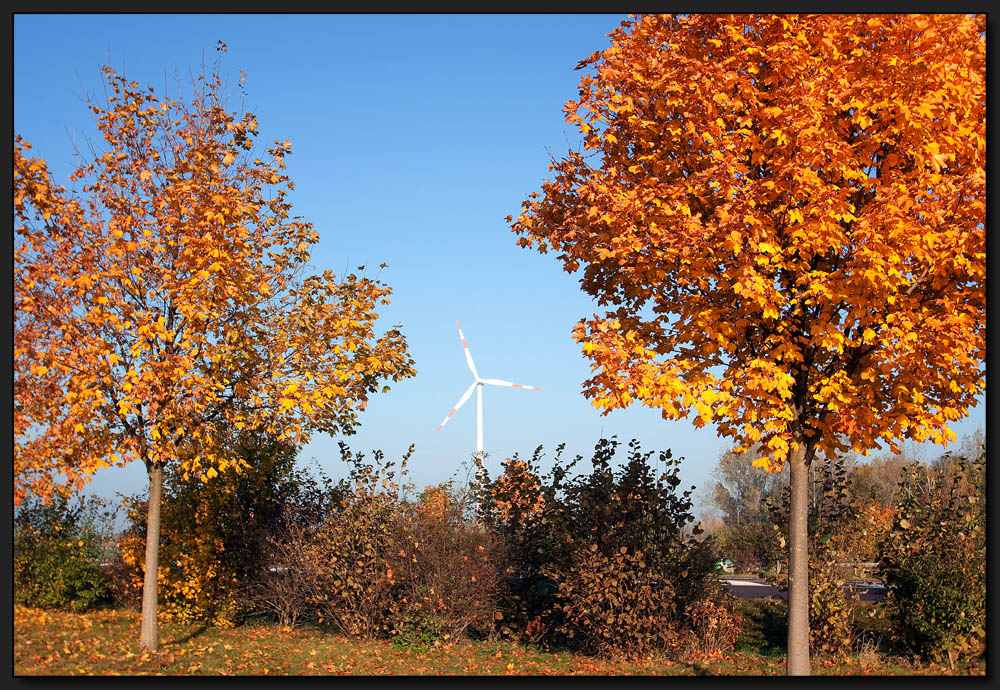 ...Goldener Herbst...