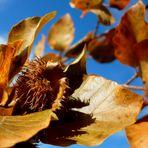 ~ Goldener Herbst ~
