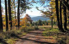 Goldener Herbst am Rennsteig, Nähe Inselsberg