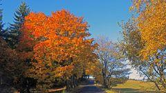 Goldener Herbst auf dem Kamm des Osterzgebirges...