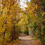 Goldener Herbst auf dem Rundweg am Kulkwitzer See