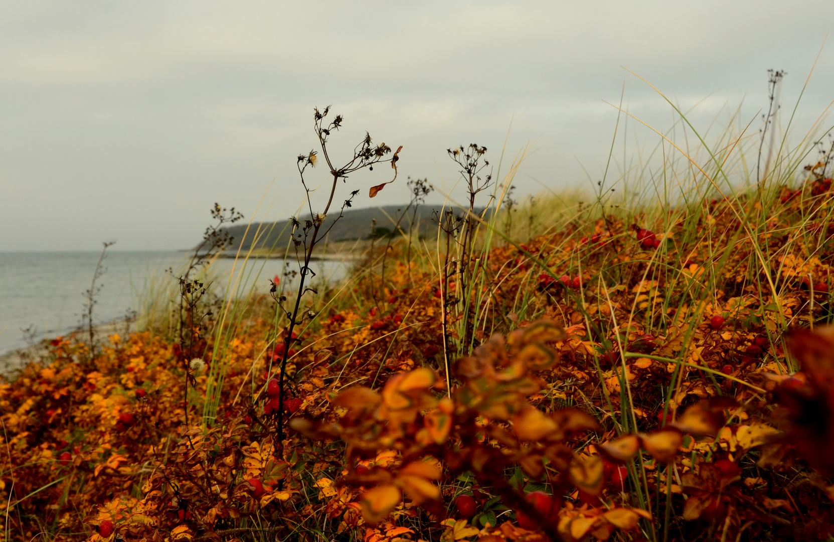 Goldener Herbst auf der Insel Hiddensee