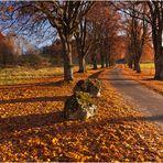 Goldener Herbst auf der schwäbischen Alb 1