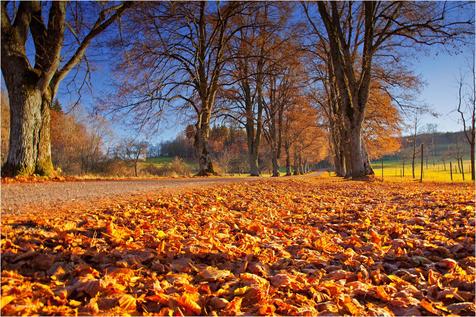 Goldener Herbst auf der schwäbischen Alb 2