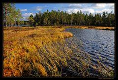 ~ ~ ~ goldener Herbst ~ ~ ~