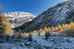 ... goldener Herbst ...