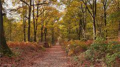 Goldener Herbst.........