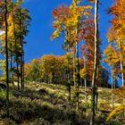 Goldener Herbst!