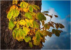"""goldener"" Herbst"
