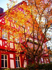Goldener Herbst - Goldener Baum