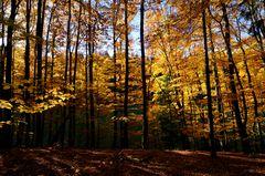 Goldener Herbst I.