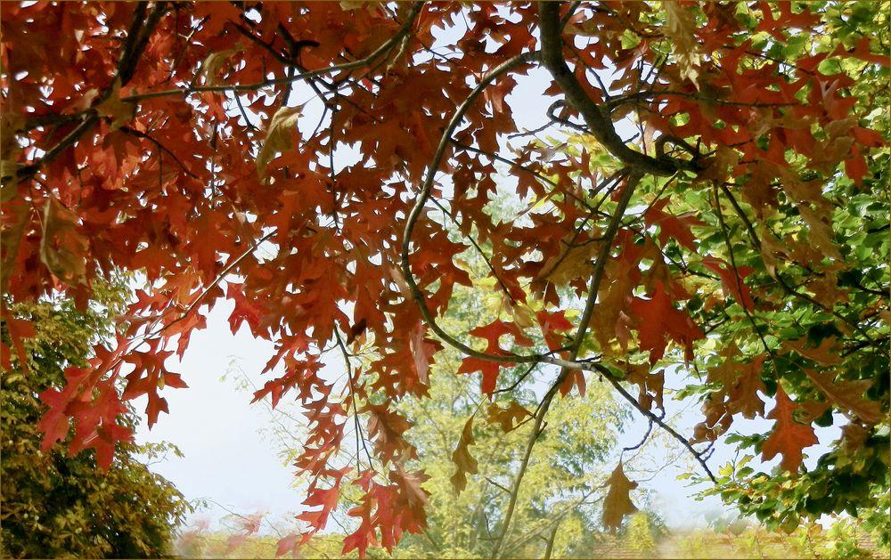 Goldener Herbst  II