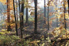 Goldener Herbst im NP Hainich