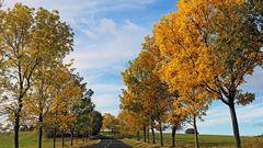 Goldener Herbst im Osterzgebirge nur gestern Vormittag...