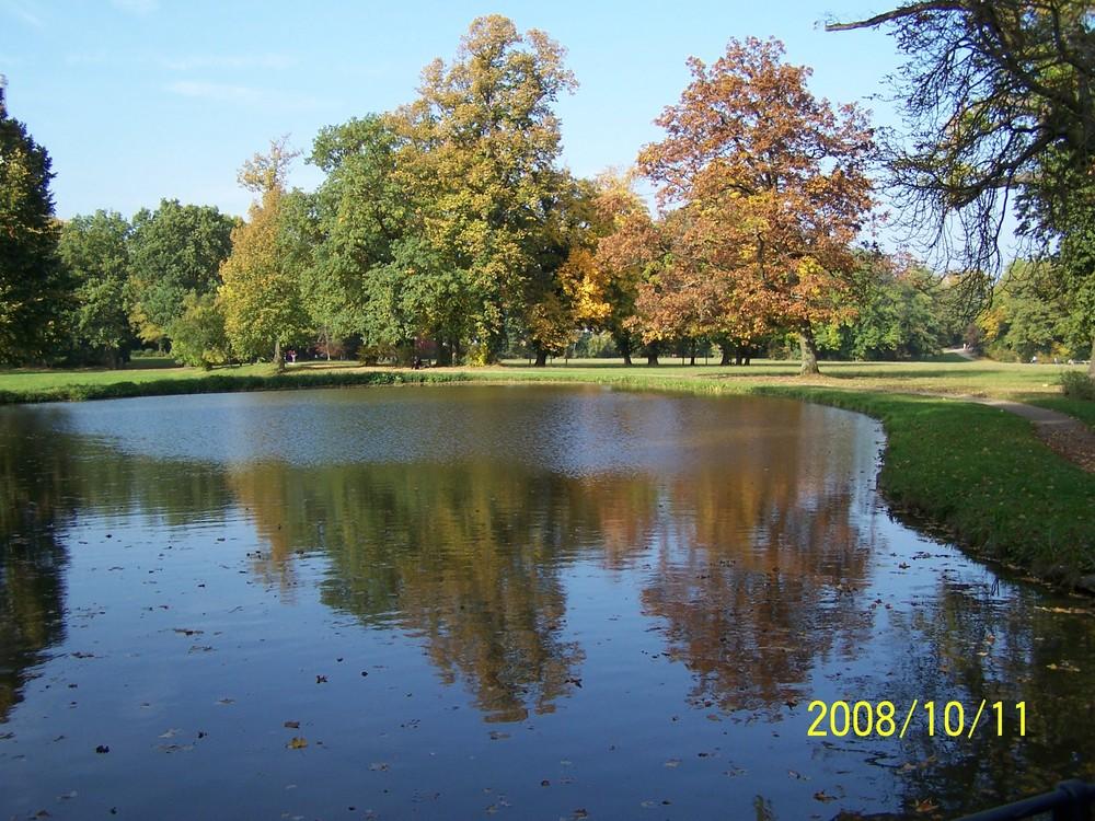 Goldener Herbst im Park Schönbusch (4)