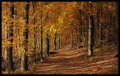 Goldener Herbst im Siegerland
