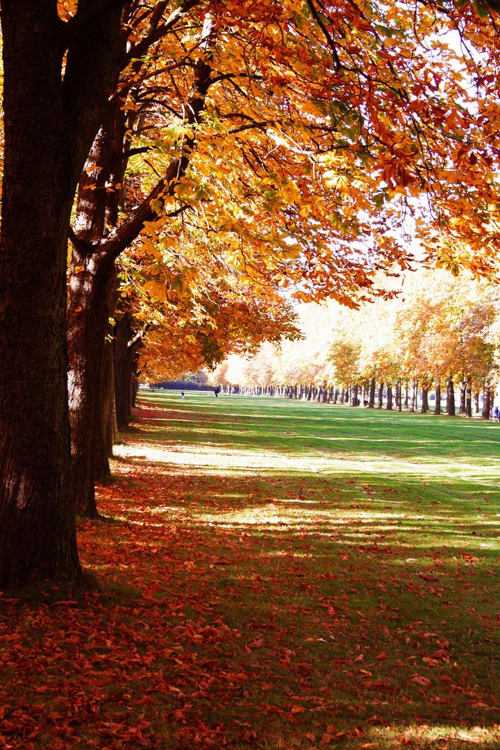 Goldener Herbst in Pillnitz