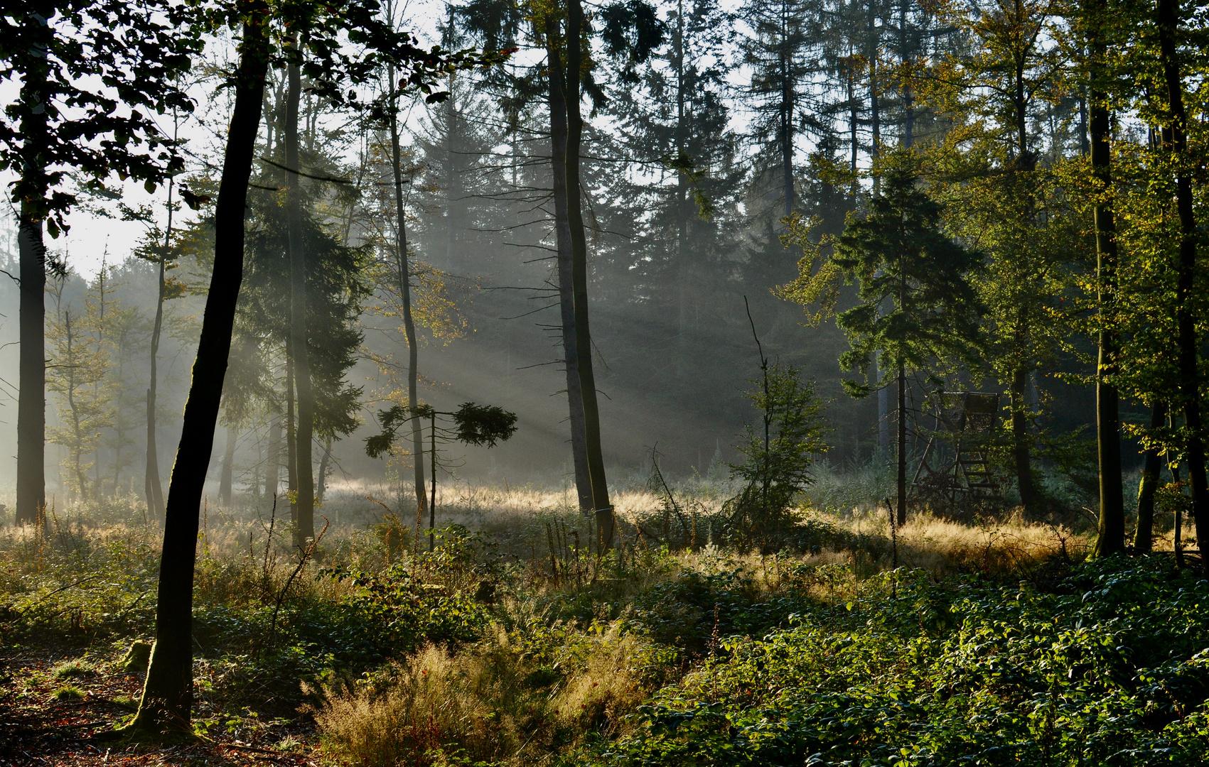 Goldener Herbst / So schön kann der Start in den Tag sein ...