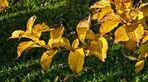 Goldener Herbst zum 1. Advent!