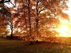 Goldener Herbsttag !