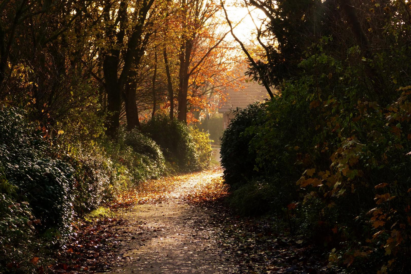 Goldener Herbstweg