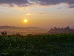 Goldener Morgen I