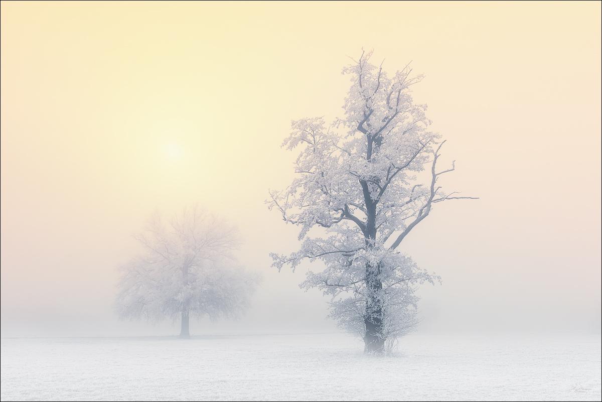 Goldener Nebel...