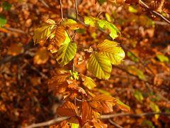 Goldener November (3)
